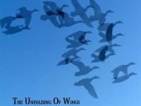 The Unfolding Of Wings